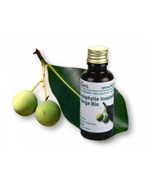 Calophylle Inophylevierge