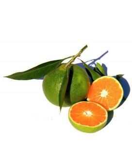 Mandarine Verte BIO
